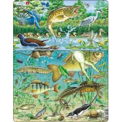Écosystème des étangs...