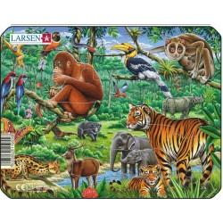 Jungle Singe - 11 pièces
