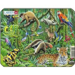 Jungle fourmilier - 11 pièces