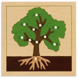 Puzzle de botanique : arbre...