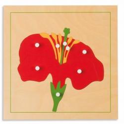 Puzzle de botanique : fleur...