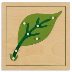 Puzzle de botanique :...