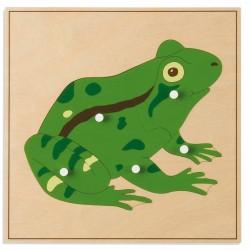 Puzzle animal : GRENOUILLE...