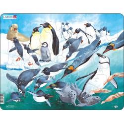 Pingouins nageant dans...