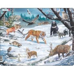 Faune hivernale en Sibérie...