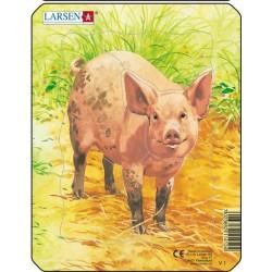 Cochon - 5 pièces
