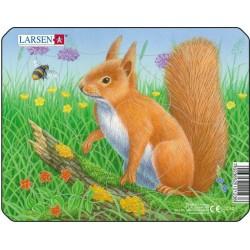 écureuil - 5 pièces
