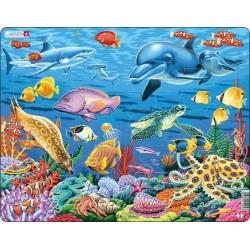 La vie marine sur un récif...