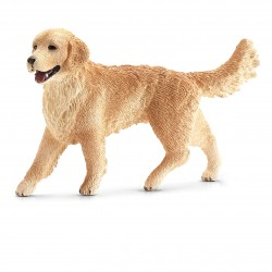 Golden Retriever - Femelle