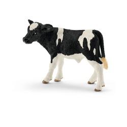 Veau - Holstein