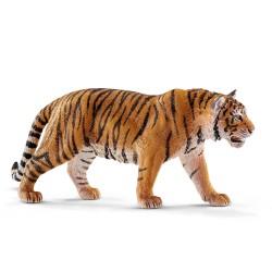 Tigre du Bengale - Mâle