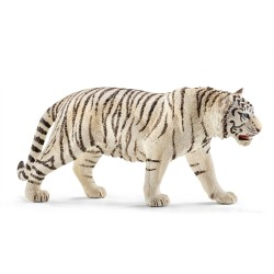 Tigre Blanc - Mâle