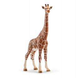 Girafe - Femelle