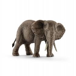 Éléphant d'Afrique - Femelle