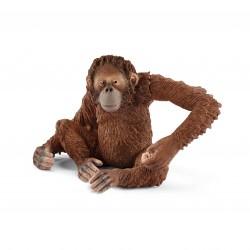Orang outan - Femelle